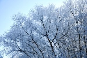 Winter Wonder Branches by LW-M-E-D-I-A