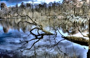 Infrared HDR Branch Reflection by lorni3