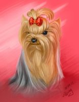 yorkshire terrier by Willborg