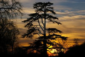 Trees Silhouetted in thesunset by wdsphotos