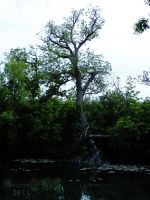 Old Tree Across the River by siannajmj