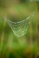 Spiderweb 03 by LapinBlancFR