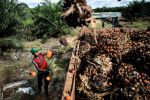 Indonesia's Palm Oil Industry Rife With Human-Righ by ~loonlau963 on deviantART