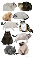 Study: Fat Cats by Enife