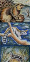 ACEO Trade - lemurkat by Redwall151