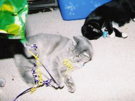 Zeus and Xena playing by Lady-Puma