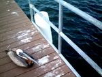 The Bird and the Dock by CompassLogic