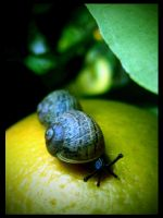 Snails by B4ndAi