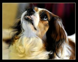 Molly...My Fur Baby by Amatuer-Pics-By-Me