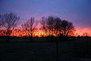 Frosty Morning 2 by Paigesmum