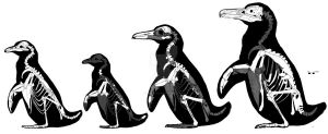 Pisco penguins by PaleoAeolos