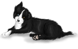Mikey the border collie by Aussienka