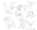 Bird Study 1.1 by A-D-Aether