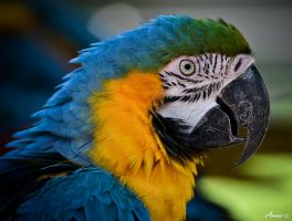 Parrot 001 by AnneMarks
