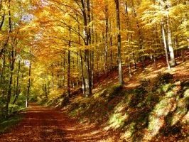 way into the golden forest by Dieffi