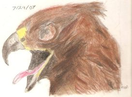 Bald Eagle Pastel by Jophish126