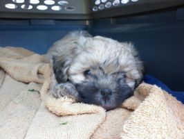 I'm Tired by Veronyak