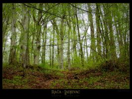 Forest Green by Neshom