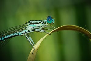 Dragonfly by jarek78fe