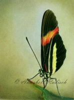 Butterfly No III by Isisnofret