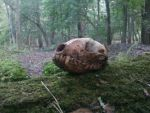 In the woods by Venus-wolf-taxidermy