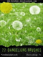 GIMP Dandelion Brushes by Project-GimpBC
