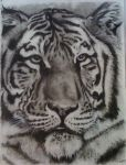 Charcoal Tiger by ForeignTorin