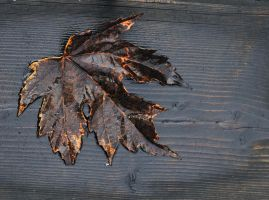 Leaf by RichardRobert