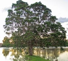 River front Tree by DigitalissSTOCK