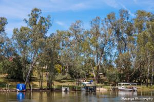Murray River Trees and Transport by Okavanga