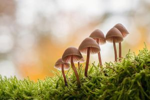 Mushrooms in the Moss by enaruna