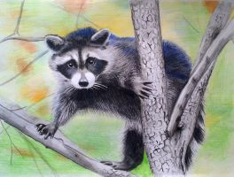Raccoon by Sonne91