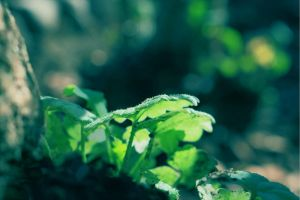 Green Leaves by Leavylaulada