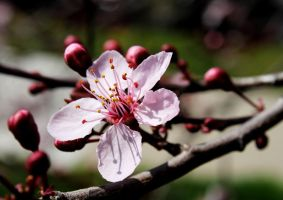 Tree Flower by AthenaValerious
