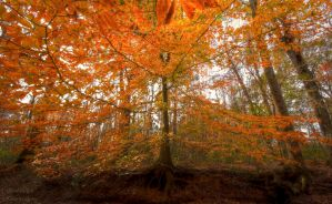 Autumn Roots by dsnider