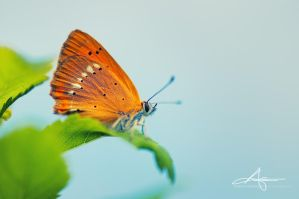 Orange Butty II by Stridsberg