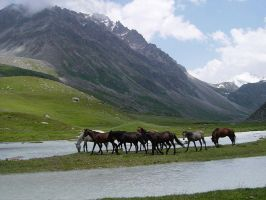 wild mountain horses by alisarinoviyks