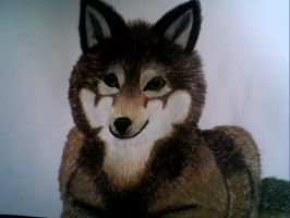 Brown Wolf - Oil Pastle made by TwilightDragon0