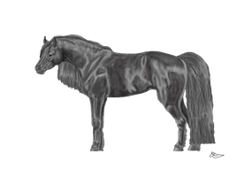 Native Mountain Horse Greyscale by NativeHorseStables