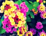 Pretty Flowers by CodyGallo