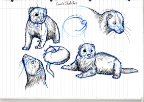Ferret Kits by Stoataggedon