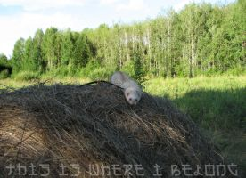 Will you look for a ferret in a haystack? by Panda-kiddie