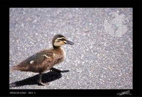 Why Did The Duckling Cross The Road? by Sketching-Sketches