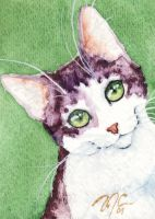 ACEO Tabby and White Cat by OdderByArt