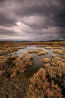 Salt marsh 3 by peka-photography