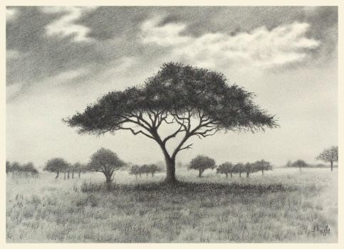 African Acacia by aakritiarts