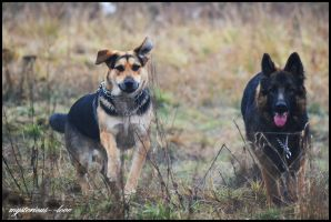 My Dogs by mysterious--love