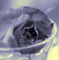 Blue Rose by JuliZib