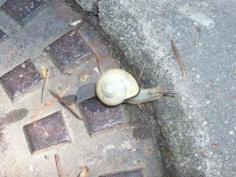 Snail on a street by Mecarion