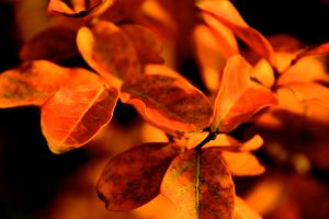 Fall Leaves by LENA3689